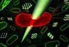 The force necessary to kill a single bacterium